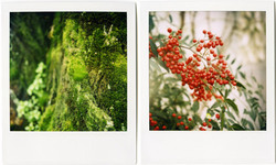 Gayla_polaroid_mossred_2